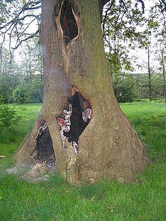 Der hohle Baum mit Glut an den Rändern der Löcher und innen.