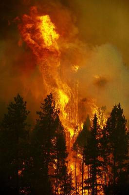 The Hayman fire, named for the spot where it is believed to have started, burns on a ridge June 12, 2002 north of Lake George, Colorado. The wildfire has burned over 90,000 acres since it started four days ago and has destroyed 21 homes with some 2, 500 other homes evacuted. As many as 45, 000 residents could be asked to leave if the fire continues to burn out of control. The fire is the largest ever in Colorado.  dpa