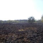 Die Gras- und Moorlandschaft ist völlig verbrannt.