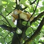 Eine Katze im Baum. (Natürlich keine echte ;P)