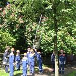 Die Leiter wird zur Rettung der Katze am Baum angelegt.