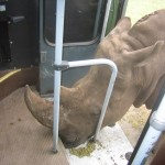 Im Serengeti-Park