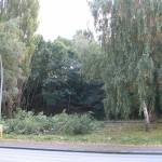 Das einzigste was hier noch stehen bleiben soll, sind die Bäume im hinteren Teil, auf dem Hang. Am Samstag, dem 22.10.2005 wird hier mit der Fällung begonnen.