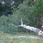 Zur gleichen Zeit ist schon der erste Baum gefallen.