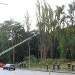 Es wird probiert, wie weit die Drehleiter an die Pappel herankommt. Bis zur Mitte des Baumes war es kein Problem.