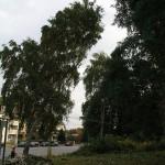 Baum fällt!!!