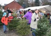 Hunderte von ausgedienten Weihnachtsbäumen auf dem Weg zum Schredder
