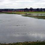Das Hinterland ist bereits mit Sickerwasser des Deiches angereichert worden (Foto: B.Wendt)