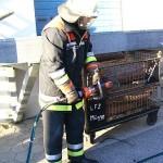Praktischer Einsatz der Rettungsschere