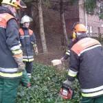 Nachdem der Baum gefallen ist, wird die Arbeit am verbliebenen Stamm begutachtet.