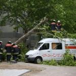 Einsatz FF Eidelstedt, Randowstraße, Baum auf Kleinlaster - Foto: Rico Thumser