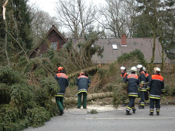 Drohten Bäume auf Haus zu stürzen. Die Bäume wurden von der FF-Boberg gefällt und mit dem Rüstwagen der FF-Kirchsteinbek auf die Bundesstraße 5 gezogen. Die B5 war zeitweilig gesperrt.© C.Timmann