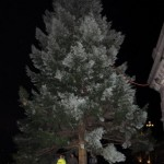 Der Baum an seinem Platz.