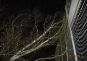 FF Schnelsen - Droht zu fallen Baum, Foto: Dieter Frommer