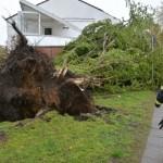Baum auf Haus gestürzt, FF Lokstedt im Einsatz (C) HamburgNews